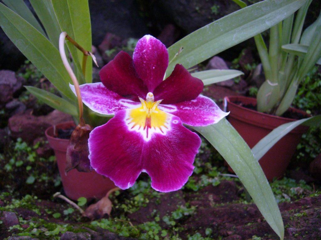 orquid mindo ecuador